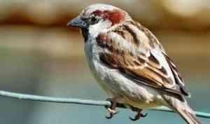 В Холмогорском районе предотвратят гибель птиц от ударов током