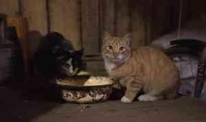 ВАрхангельске мужчина отказался покидать дом, сошедший сосвай, из-за своих 16 кошек