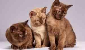 Не может бросить 16 кошек: архангелогородец остается в сошедшем со свай доме