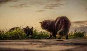 Архангелогородец не захотел переезжать из аварийного дома из-за 16 кошек
