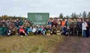 В Вельске высадили 750 молодых сосен