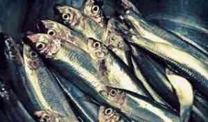 В округе Варавино-Фактория начал работу рыбоперерабатывающий завод