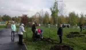 В Северодвинском городском парке высадили дубы, яблони и акации