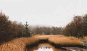В Красноборском районе двое мужчин утопили знакомого в болоте и забросали мхом