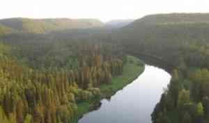 В САФУ состоится международная полевая школа «Управление лесами»