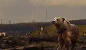 Причины понервничать: из-за чего тревожатся жители Архангельской области?