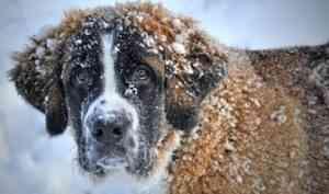 Двух жителей Каргопольского района приговорили к исправительным работам за убийство собаки