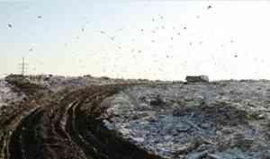 На полигонах ТКО Архангельска, Северодвинска и Новодвинска начались изыскательские работы