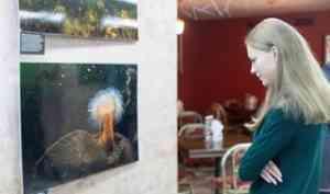В Архангельске открылась выставка подлёдных фотографий обитателей Белого моря