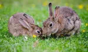 Девять кроликов погибли в результате пожара в Архангельской области
