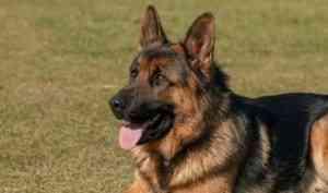 Служебная собака помогла архангельским полицейским найти грабителя-рецидивиста