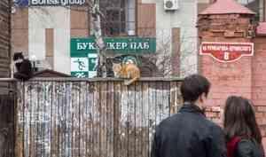 «Как можно реставрировать сайдингом?»: московская художница — о неприятном облике Архангельска
