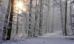 В Поморье на месте ликвидированных за счет инвестора «Шиеса» свалок посадят деревья