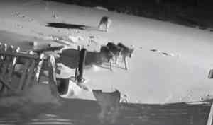 Жители Неноксы впанике из-за нашествия волков