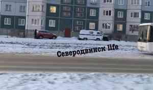 В Северодвинске мужчина выкинул собаку из окна