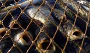 У браконьеров в Архангельской области изъяли более 4 тонн рыбы