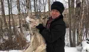 В ловушки возле Нёноксы попались двое взрослых волков. Смотрим фото депутата с одним из них
