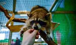 В Архангельской области контактные зоопарки до сих пор работают