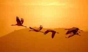 Пинежский заповедник принимает детские работы на конкурс «Птица солнца»