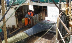 Рыбаки, ведущие промысел в Северном бассейне, столкнулись с проблемой смены экипажа