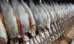 Из Архангельской области на экспорт отправлено более 440 тонн рыбы