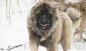 В деревне под Архангельском волкодав не пускал жильцов в их собственный дом