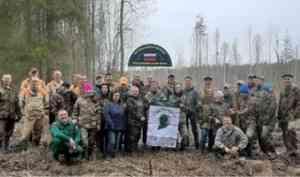 «Сад памяти» заложен на землях лесфонда Каргопольского района