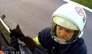 Кошка проткнула лапу наконечником ограды в Архангельске. Ее вызволяли спасатели — видео