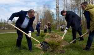 В Северодвинске сотрудники СПО «Арктика» высадили пихтовую аллею, поддержав международную акцию «Сад памяти»