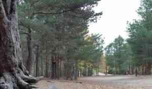 Въезд в Ягринский бор в Северодвинске закрыт на месяц
