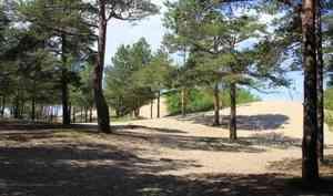 В Северодвинске закрыли для посещения Ягринский бор и детские площадки