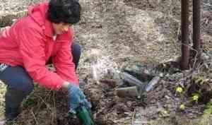 Архангельские активисты ОНФ: Спасите Беломорье от мусорной пандемии!