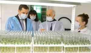 Александр Цыбульский ознакомился с работой лаборатории по выращиванию элитного картофеля