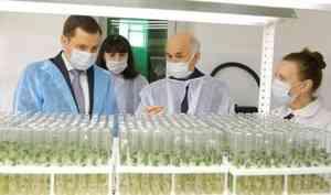 Александр Цыбульский посетил лабораторию по выращиванию элитного семенного картофеля