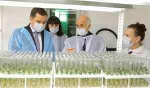 Александр Цыбульский посетил лабораторию по выращиванию элитного картофеля