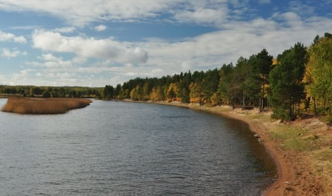 Экологи потребовали защитить от вырубок леса вдоль рек в Устьянском районе