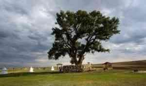 Всероссийской программе «Деревья – памятники живой природы» - 10 лет