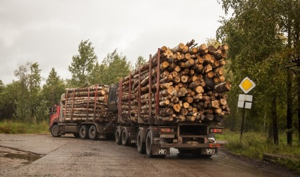 «УЛК» оштрафовали на 40 тысяч рублей за задержку зарплаты в Виноградовском леспромхозе