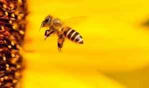 Что не так с пчеловодством на севере?