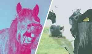 Агрессивный вологодский конь до смерти напугал корову