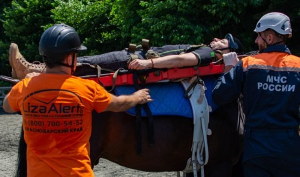Сочинские спасатели обучают волонтёров поисковым работам на лошадях
