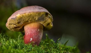 Роспотребнадзор напомнил северянам о правилах «общения» с грибами