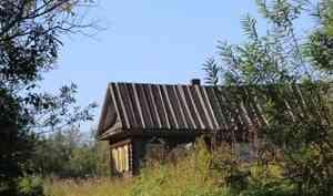 В июле жители Архангельской области сообщили о двух нападениях волков