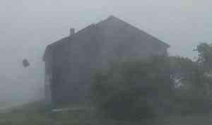 Деревья гнутся до земли, с крыши срывает листы — видео урагана в селе Сура Пинежского района