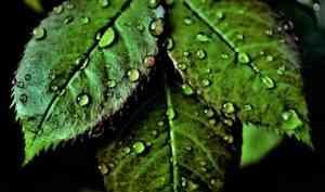 В Архангельской области в большинстве районов пройдут дожди и грозы