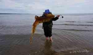 Записки с Белого моря: как экоактивистки провели пластиквотчинг и встретили медведя. День четвертый