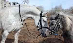 Друзей несдают намясо! Как конный клуб «Тавро» переживает коронавирусный карантин