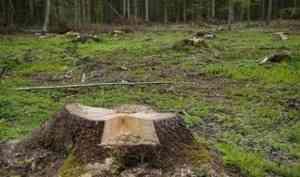 «Мартовские вырубщики» отделались условкой: оглашен приговор лесным браконьерам