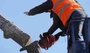 Архангельск выделил 267 тысяч рублей на уборку деревьев в Маймаксе
