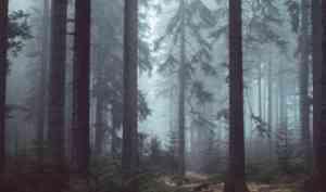 В Архангельске спасатели нашли бабушку с тремя внуками, потерявшихся в лесу